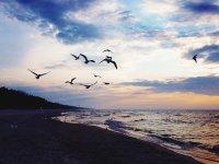 morze i mewy